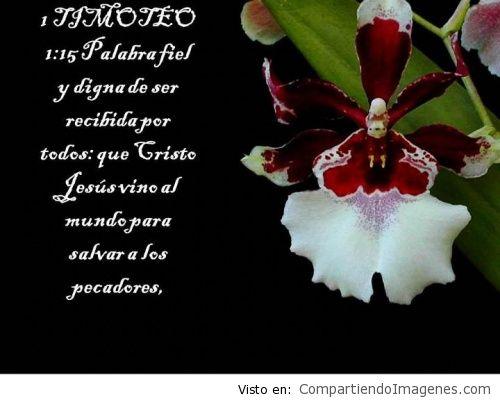 ImagenesConVersiculos_20