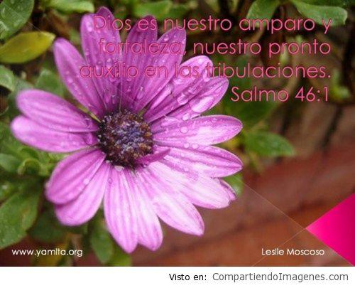 Dios es nuestro amparo y fortaleza, nuestro pronto auxilio en las tribulaciones