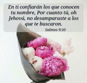 El Señor no desampara a quienes les busca