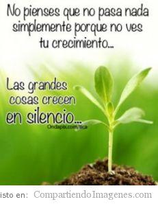 Las grandes cosas crecen en silencio