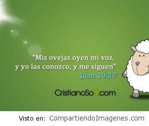 Mi ovejas oyen mi voz…
