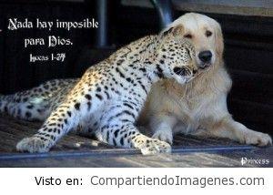 Nada hay imposible para nuestro Dios