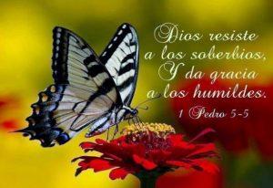 Dios resiste a los soberbios, y da gracia a los humildes