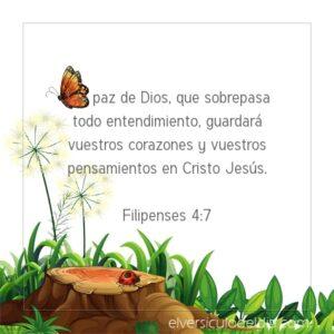 Postal – La paz de Dios guarde tu corazón