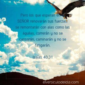 Postal – Los que esperan en el Señor renovarán sus fuerzas.